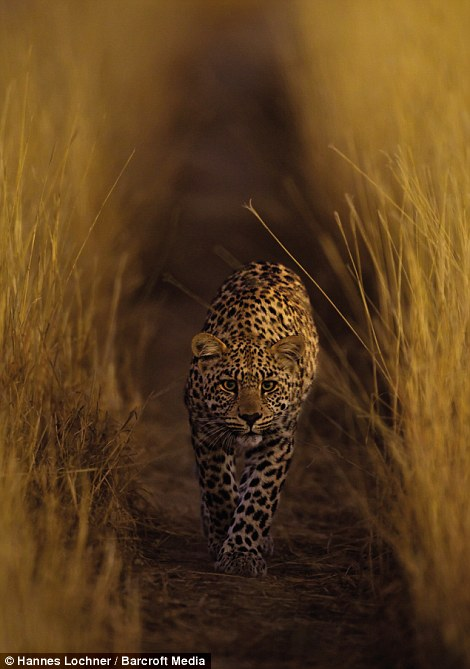 Dark Kalahari Photos By Hannes Lochner Heine S